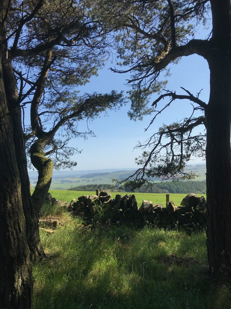 View from Norman's Law, Fife, Scotland